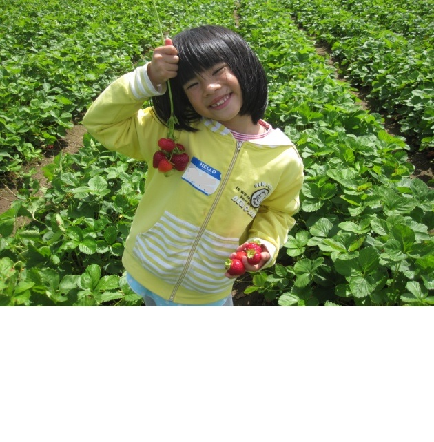 strawberry picking2.jpg