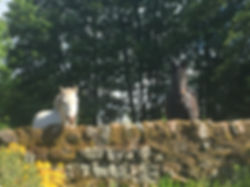 Equine B&B guests at Muiryhill house