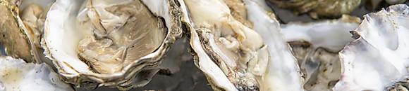季節のおすすめメニュー「牡蠣」