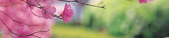 季節のおすすめメニュー「春」
