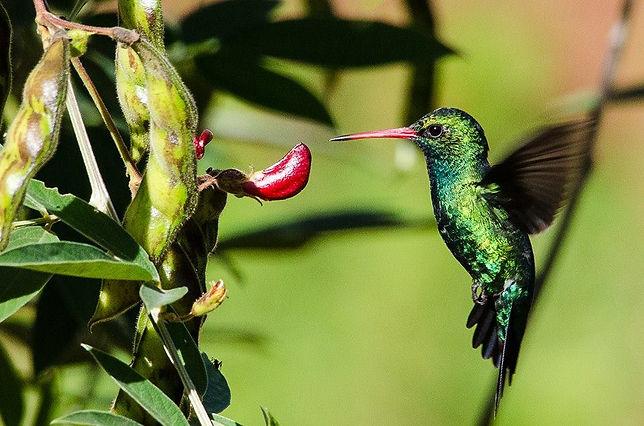 Kolibri_1.JPG