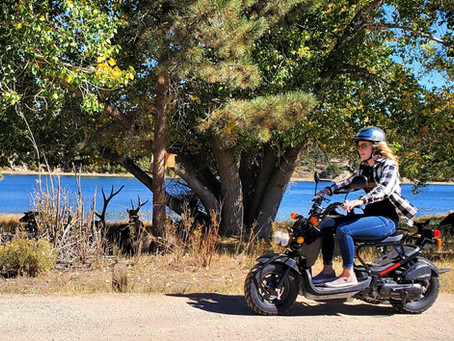 Scooter Rentals in Estes Park - Getting Close to Wildlife