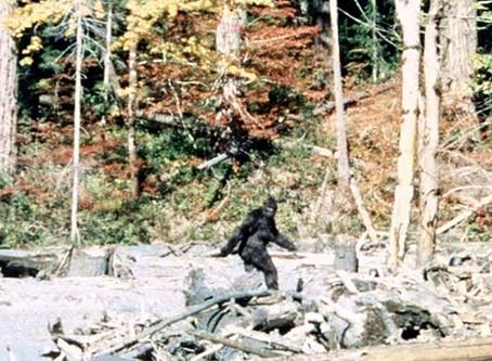 Bigfoot Sighting in Estes Park Colorado
