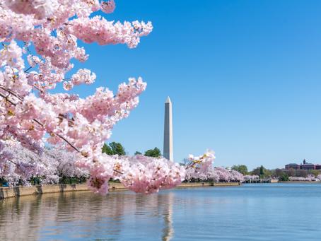 2019 National Cherry Blossom Festival 國家櫻花節 衝出紐約出發華盛頓特區