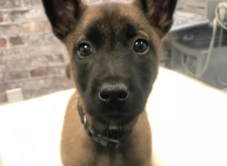 Meet Koda!