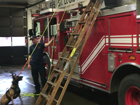 Armour's Ladder Training