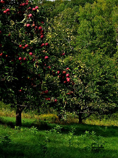 Apple Tree, Donna Steinberg Clinical Psychologist Hanover, NH