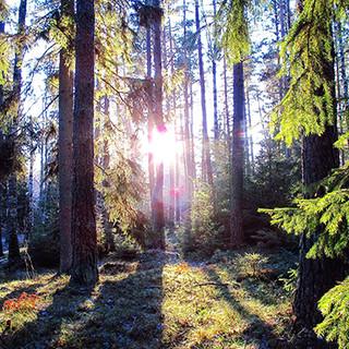 GIC2020 - Forest.jpg