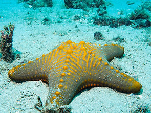 starfish on ocean floor