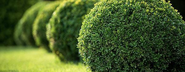 shade-evergreen-header.jpg