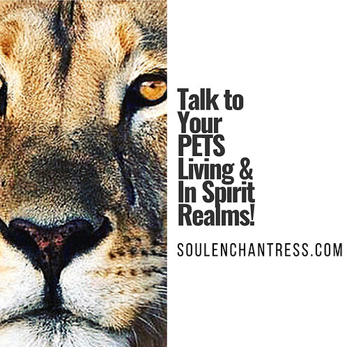 TALK TO YOUR PETS LIVING & IN SPIRIT REALMS ~ PRIVATE SESSION