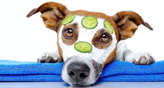 Dog Spa