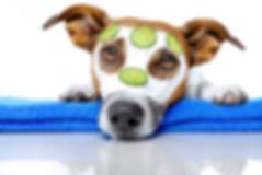 Doggie Spaw Day