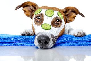 Чистая собака с огурцами