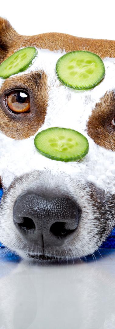 Honden spa
