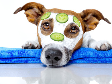 If you read 1 article about Missouri City pet sitting read this one.