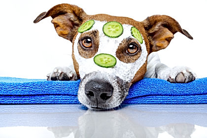 Dog Spa what is all the fuss about grain free dog food?