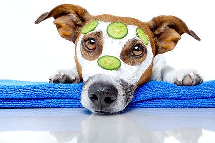 Mobile Dog Grooming in Croydon Surrey