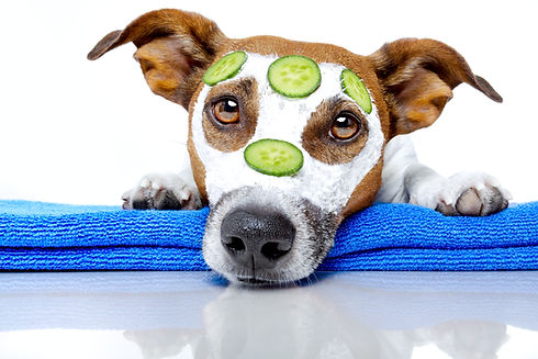 Temecula mobile grooming pet health
