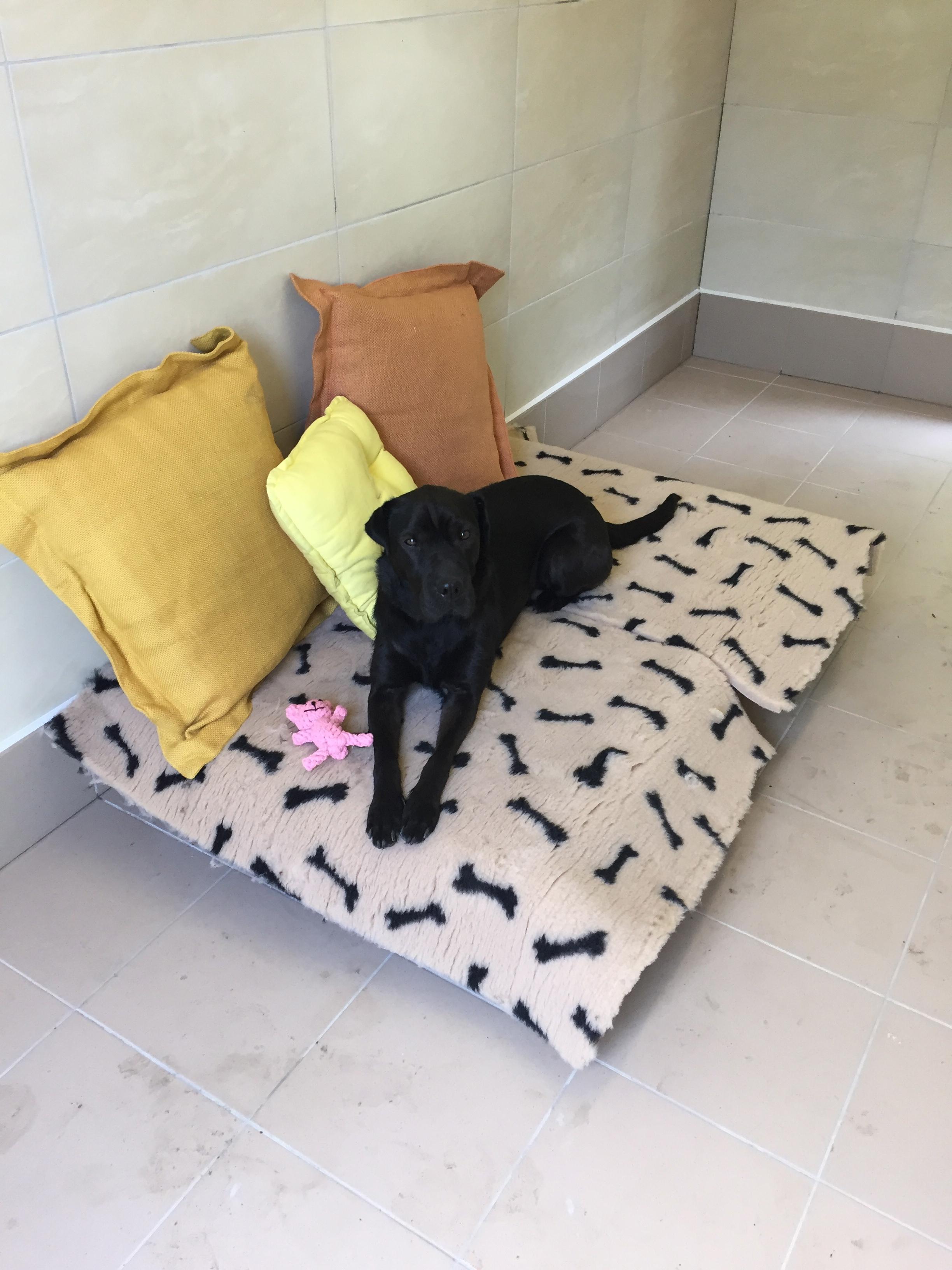 Sunny qui profite du canapé du boxe