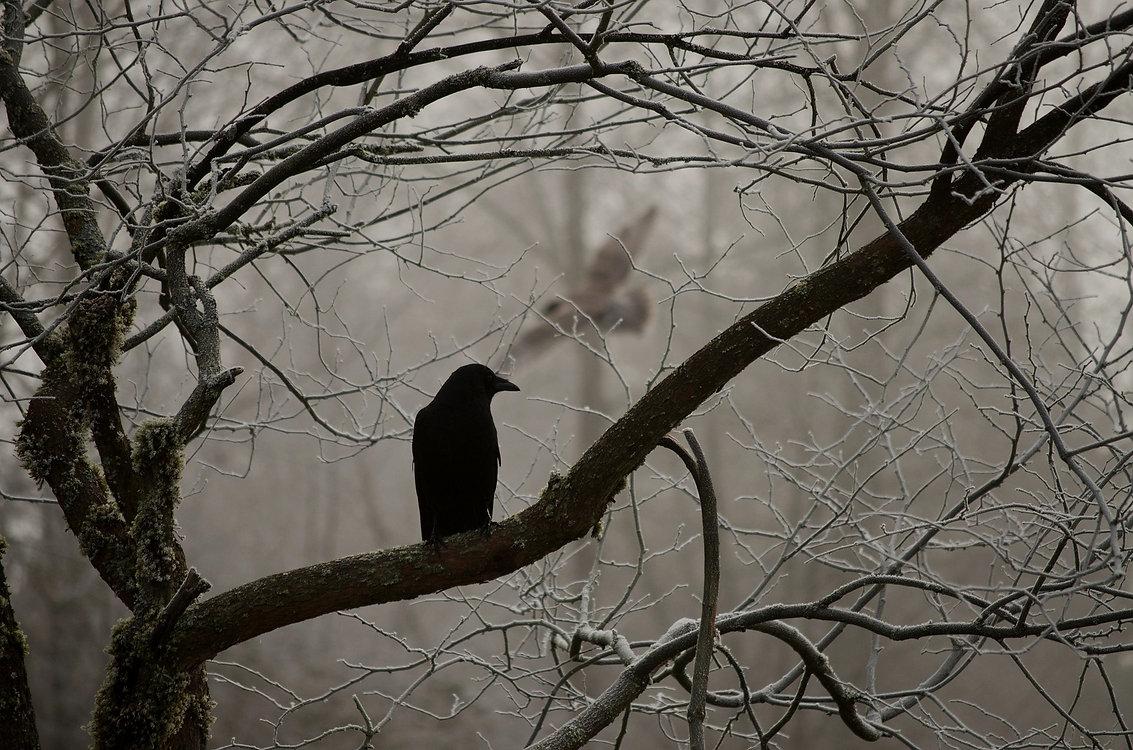crow-2397589_1920_edited_edited.jpg