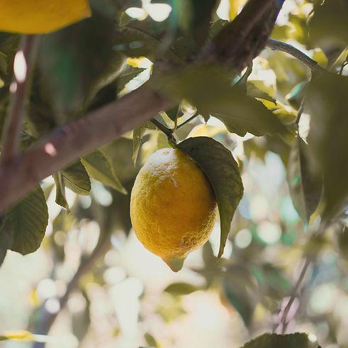 Limone copia.jpg