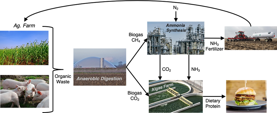 Bioammonia1.png