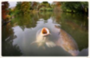 пруд для разведения рыбы