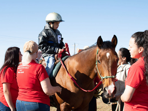 Seeking Volunteer Coordinator to Manage Equine Assisted Therapy Volunteers!