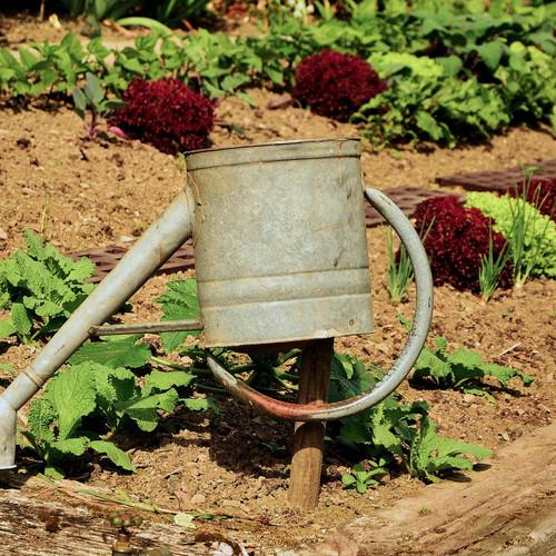 garden-1033574_1920.jpg