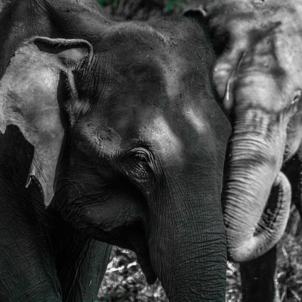 Read my story on Kabini wildlife
