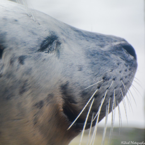 Why did I find similarities between Pacific Harbour Seals and dogs?