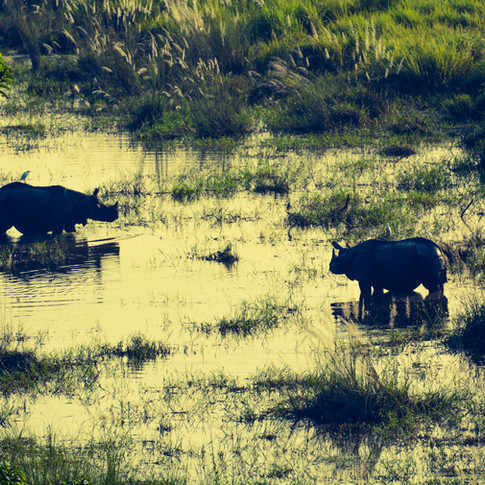 The intangible one-horned creatures of Gorumara