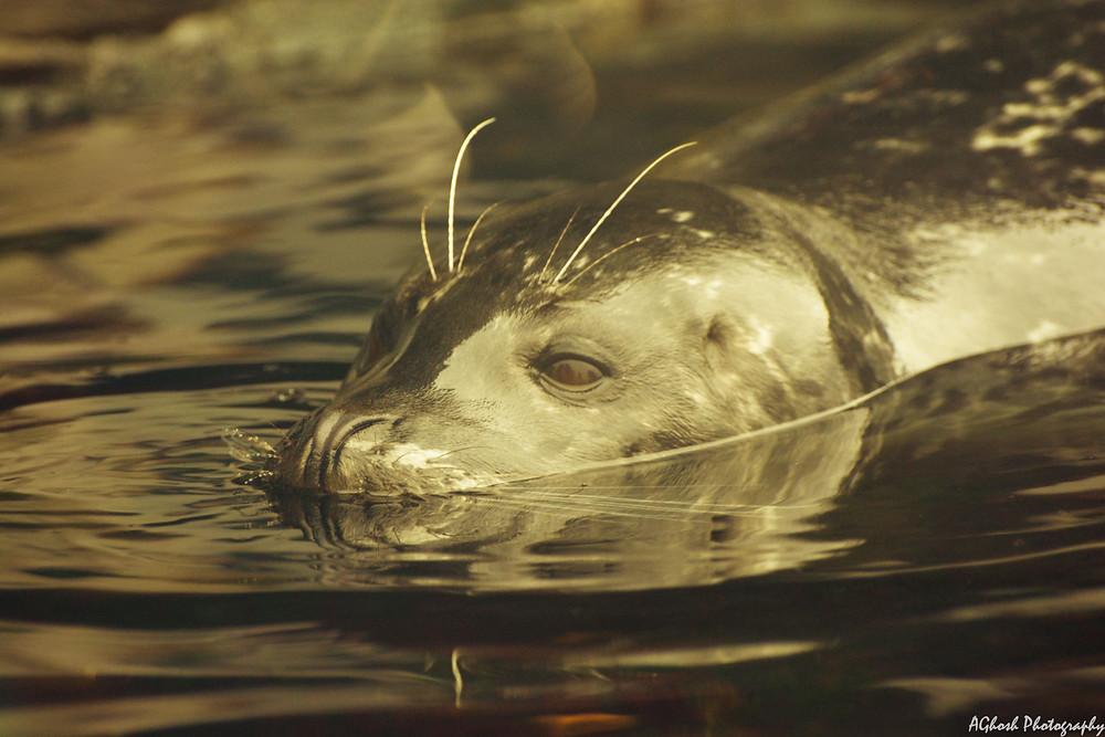Seattle Washington Harbor Seals