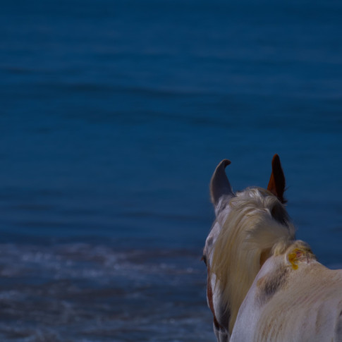 Do you know that horses are competent natural swimmers?