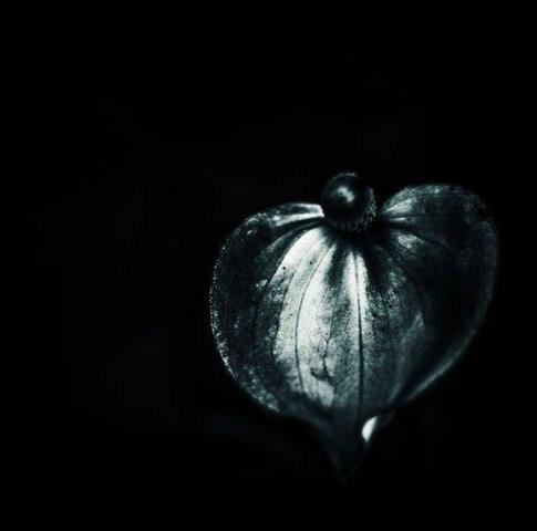 Reflection of full moon light on a petal