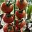Thumbnail: Cherry Tomato