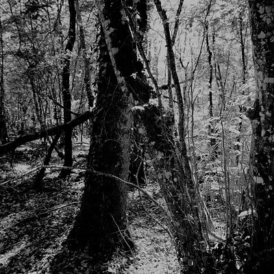The chestnut forest #14