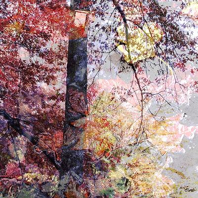 Couleurs d'automne - 5