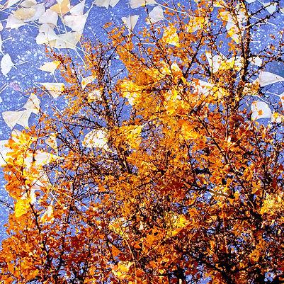 Couleurs d'automne - 11
