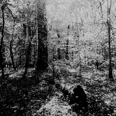 The chestnut forest #13