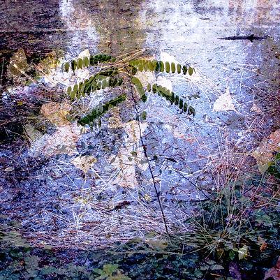 Couleurs d'automne - 10