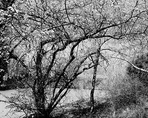 Le Touch et l'arbre