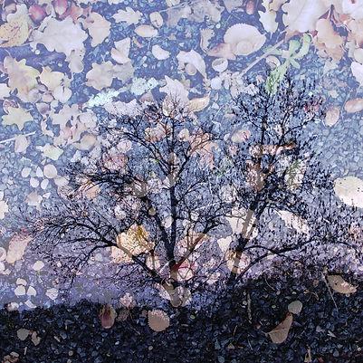 Couleurs d'automne - 6