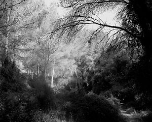 The path in the forest #19