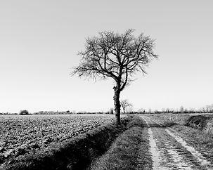 L'arbre en chemin