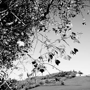Feuilles et paysage