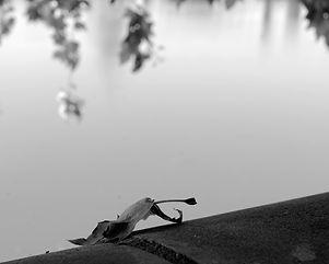 La feuille de la Garonne