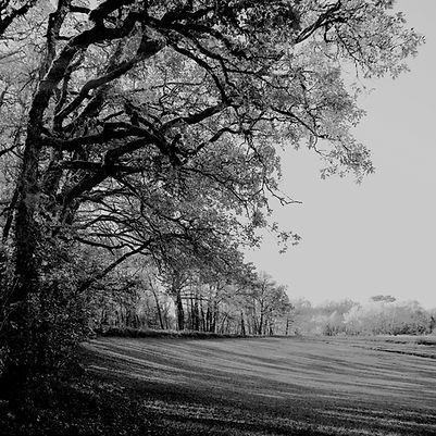 Quercy landscape #4