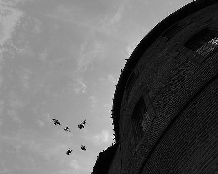 Les pigeons et la tour